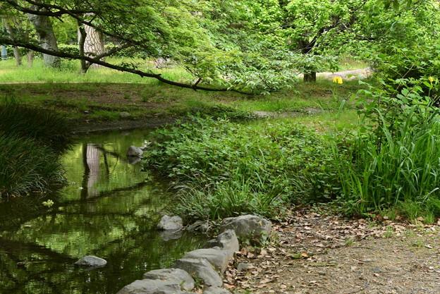 黄と緑の出水の小川