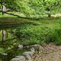 Photos: 黄と緑の出水の小川