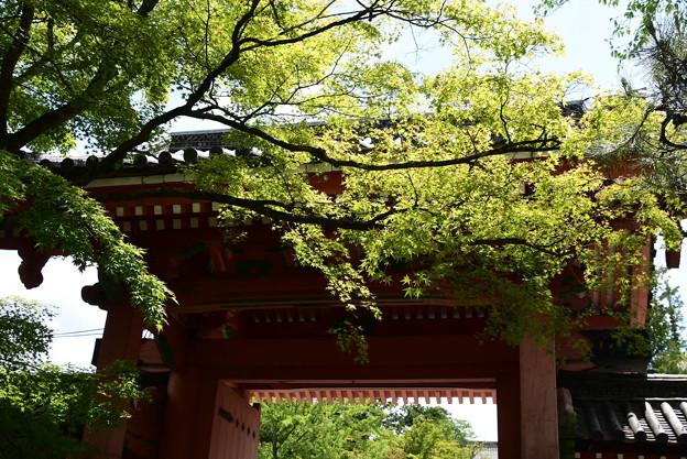 緑に包まれる総門