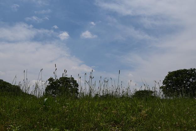 夏近づく賀茂川
