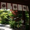 初夏の梨木神社