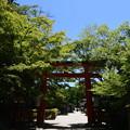 緑の下鴨神社