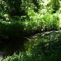 緑に染まる泉川