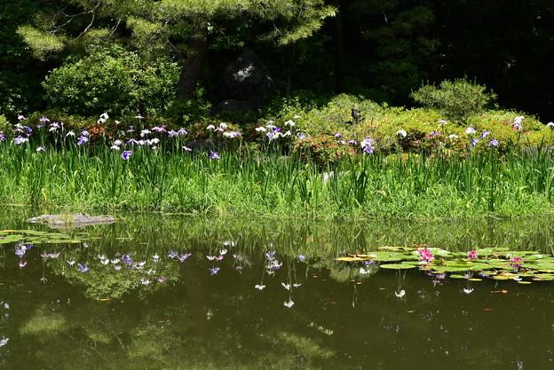 花菖蒲を映す白虎池