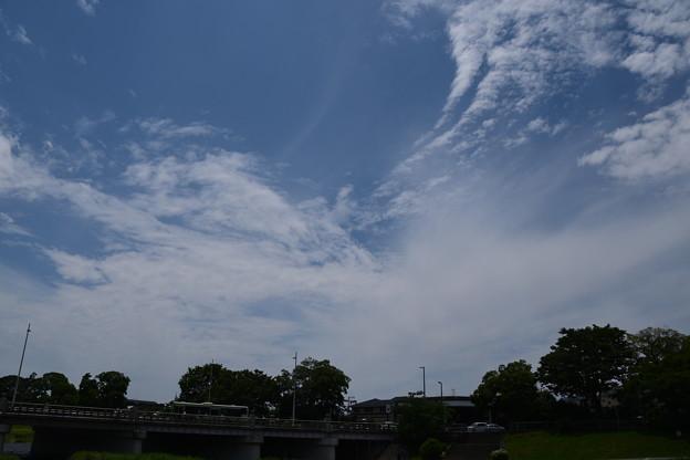 もう夏空の賀茂川