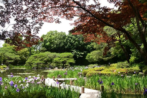 春もみじと花菖蒲の西神苑