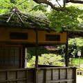 夏近づく中神苑
