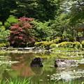 赤と緑の蒼龍池