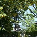 お釈迦様を蔽う菩提樹(ボダイジュ)
