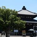 納骨堂脇の菩提樹(ボダイジュ)