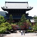 緑と春もみじの金戒光明寺