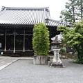 元三大師堂と菩提樹(ボダイジュ)