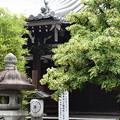 元三大師堂前の菩提樹(ボダイジュ)