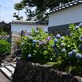 紫陽花咲く称名寺