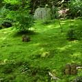 緑の中のお地蔵様