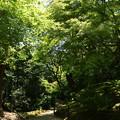 緑に包まれる庭園