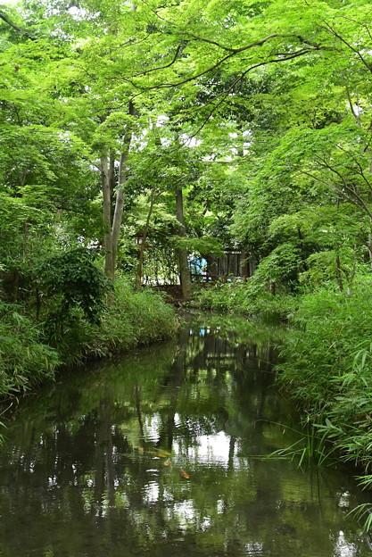 緑の中を泳ぐ