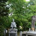 合歓咲く会津藩墓地