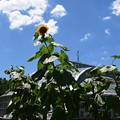 Photos: 夏空の府立植物園