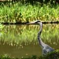 池の見張り番