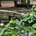 Photos: 相国寺蓮池