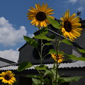 Photos: 夏空の大念寺