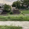 Photos: 増水した賀茂川