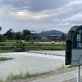 Photos: 雨上がりの賀茂川