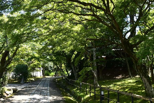 Photos: 晩夏の緑