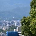 Photos: 仁和寺の塔が見えます~