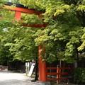 Photos: まだ緑の下鴨神社