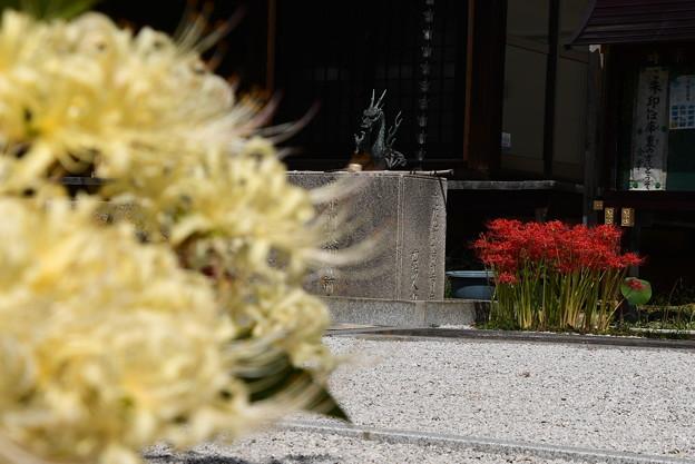 彼岸花咲く極楽寺