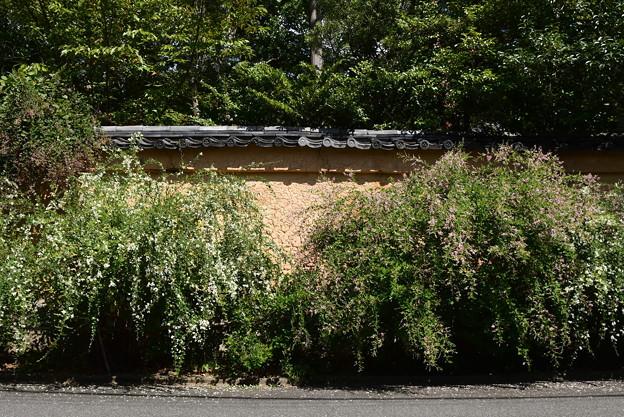 萩の霊場・迎称寺(こうしょうじ)