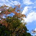 墓地脇の紅葉