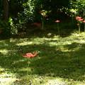 苔の中の彼岸花(ヒガンバナ)