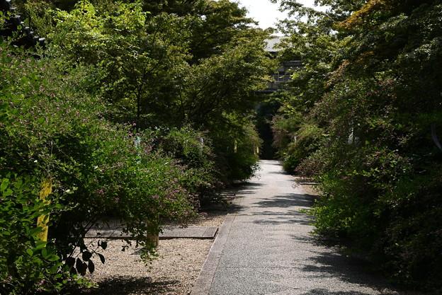 萩咲く梨木神社