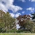 半木の道の秋空