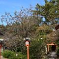 桜もみじの平野神社
