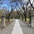 秋の平野神社