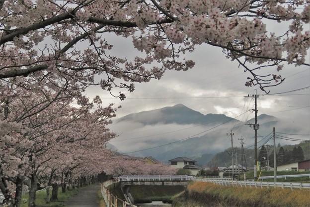 桜&本宮山_3427