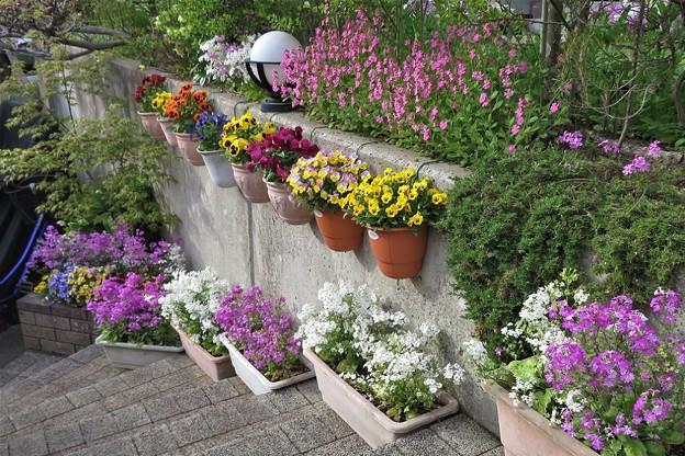 階段の花_3503