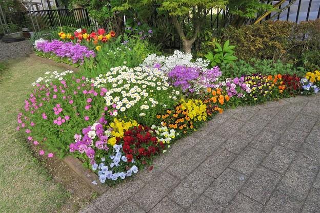 花壇の花_3504