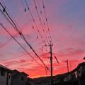 Photos: 夕焼け_7765
