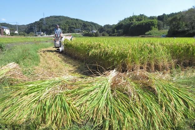 稲刈り_0410