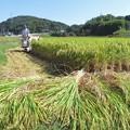 Photos: 稲刈り_0410