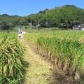 Photos: 稲刈り_0411