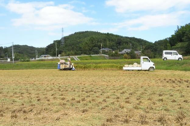 稲刈り_0631