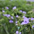 午前だけの花