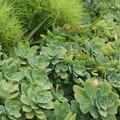 Photos: 多肉植物