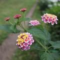 Photos: 花壇の小道